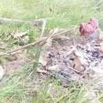 bushcraft warszawa, bushcraft dla kobiet, treningi outdoorowe, survival dla kobiet warszawa, grupa bushcraftowa dla kobiet, g-combat outdoor, treningi w lesie dla kobiet, treningi w lesie warszawa